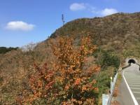 雲仙紅葉 (2)